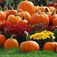 Fall Festival Needs Volunteers